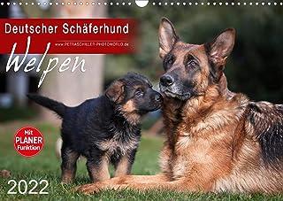 Deutscher Schäferhund - Welpen (Wandkalender 2022 DIN A3 quer): Süße Schäferhundwelpen (Geburtstagskalender, 14 Seiten ) (CALVENDO Tiere)