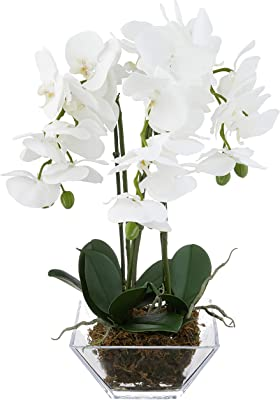Nearly Natural 4570 Triple Phalaenopsis Orchid in Glass Vase,Green/White