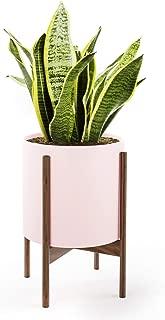 Best largest indoor plants Reviews