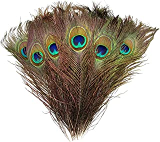 Natural Peacock Feathers 10