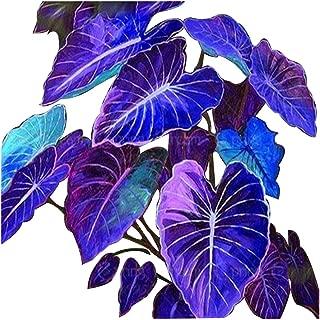 5pcs Big Leaf Palm Seeds Rare Flower Seeds Exotic Plants Tree Bonsai Pots Planters Tropical Ornamental Balcony for Home & Garden