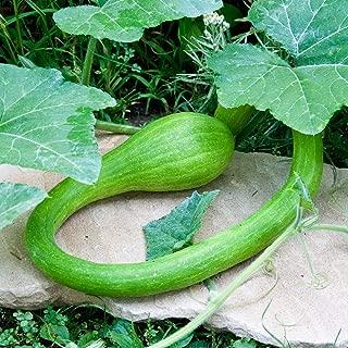 David's Garden Seeds Squash Summer Tromboncino SL1322 (Green) 25 Non-GMO, Heirloom Seeds