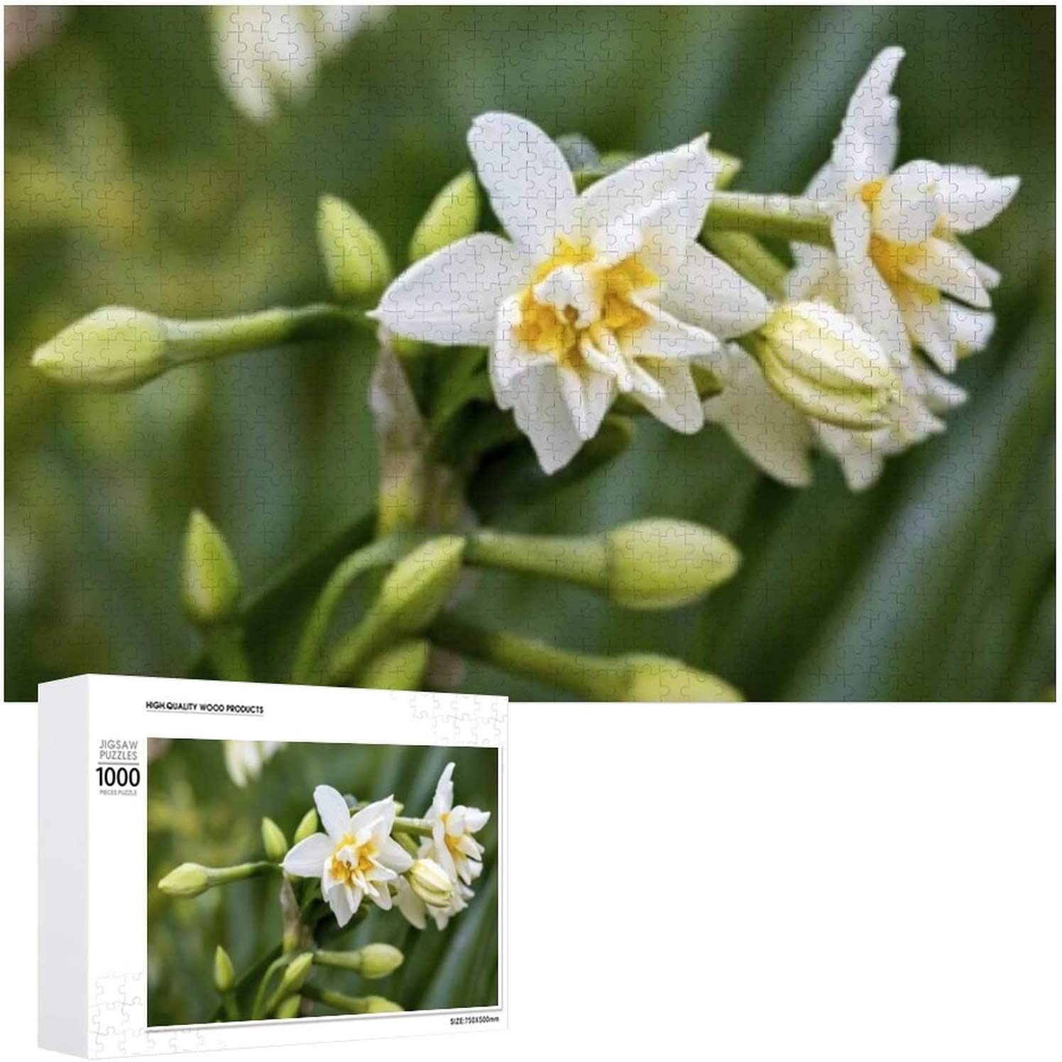 Daffodils - 1000 Jigsaw Puzzles for Age 12 OFFer Adults 5% OFF Kids Yea