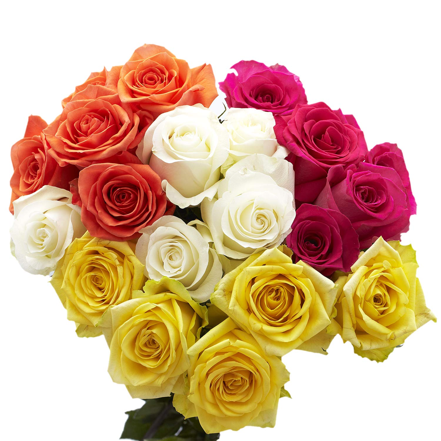 75 Fresh Cut Assorted Color Roses Flowers Long - for Max 71% OFF discount Stem