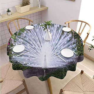 DILITECK Peacock Food Round Tablecloth Peacock Open His Tail Feathers in Tropical Garden Unusual Birds Nature Ornament Table Decoration Diameter 63