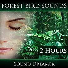 Forest Bird Sounds (2 Hours)