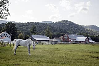 Photograph - White horse on a farm near Townshend, Vermont- Fine Art Photo Reporduction 66in x 44in