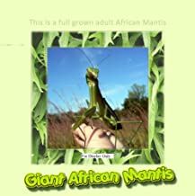 live mantis for sale