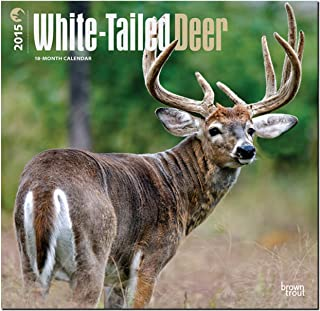 White-Tailed Deer 2015 Square 12x12 (Multilingual Edition)
