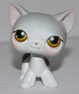 Shorthair Kitten #138 (4 Paws: Grey, Red Eyes, White Face and Paws) - Littlest Pet Shop (Retired) Collector Toy - LPS Collectible Replacement Single Figure - Loose (OOP Out of Package & Print)