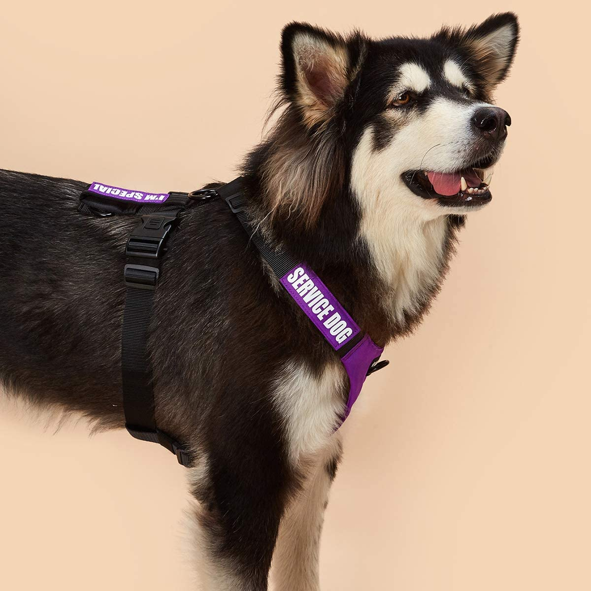 Active No Pull Tactical Training Dog Harness Dihapet Service Dog Harness Adjustable Puppy Small Medium Large Dog Vest