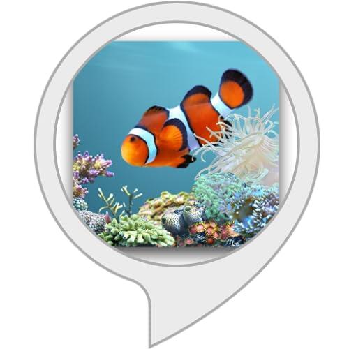 Mein Aquarium für Echo Show, Echo Spot