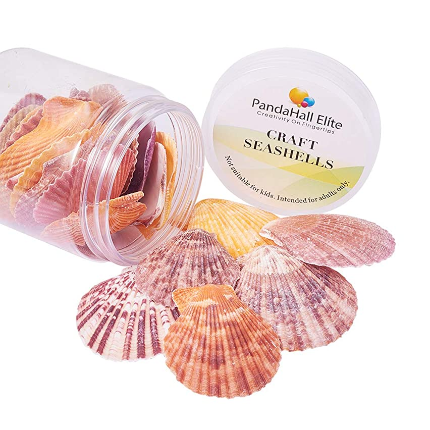 PH PandaHall 1Box (About 25pcs) Scallop Sea Shells Seashells Charms for Craft Making, Home Decoration, Beach Party, Fish Tank and Vase Fillers (Light)