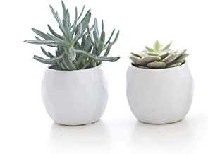 Best cool potted succulents Reviews