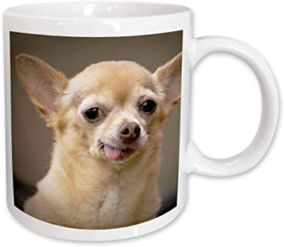 3drose Danita Delimont–犬–チワワ犬、サンタフェ、新しいメキシコ–まくるus32jmr0502–Julien McRoberts–マグカップ 15-oz ホワイト mug_92682_2