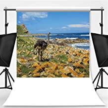 Ostrich in South Africa Theme Backdrop Photography Polyester Backdrop,127898,5x7ft