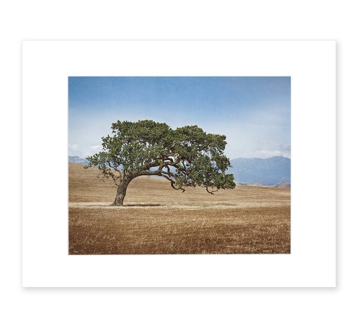 California Landscape Wall Art Oak in Wine Tree Max 40% Outlet SALE OFF Picture Country