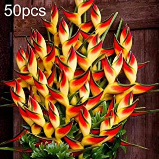 50Pcs Heliconia Seeds Ornamental Plant Home Garden Balcony Office Bonsai Decor - Heliconia Seeds