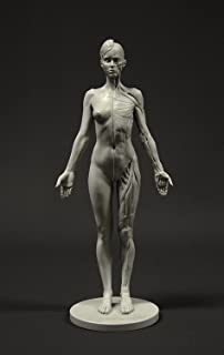 Amazon com: AnatomyTools - 1/6 life scale anatomy figures