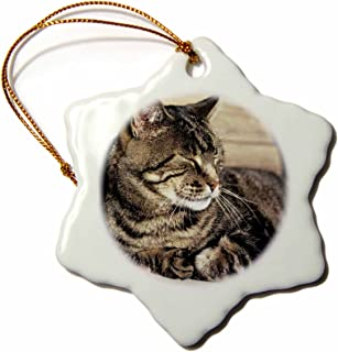 3dRose orn_94870_1 Utah Capitol Reef Sleeping Tabby Cat Ric Ergenbright Snowflake Decorative Hanging Ornament, Porcelain, 3-Inch
