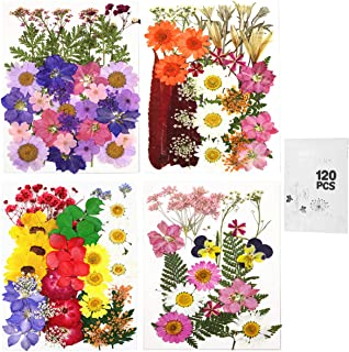 120pcsReal Dried Pressed Flowers Leaves Petals for Crafts, Colorful Pressed Flowers Daisies for Candle Jewelry Nail Penda...