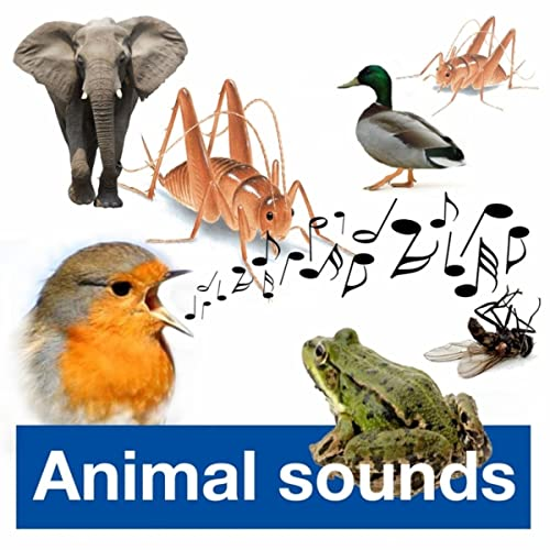 Bird Whistle ((iPhone Song)) by Hermes Sound-Effects Ringtones