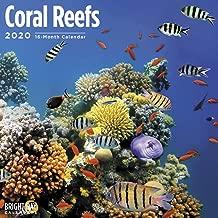 2020 Coral Reefs Calendar 12 x 12 Wall Calendar by Bright Day Calendars (Under The Sea Wall Calendar)