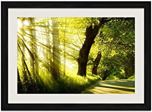 Through the Forest Sunshine - Art Print Wall Black Wood Grain Framed Picture(20x14inches)