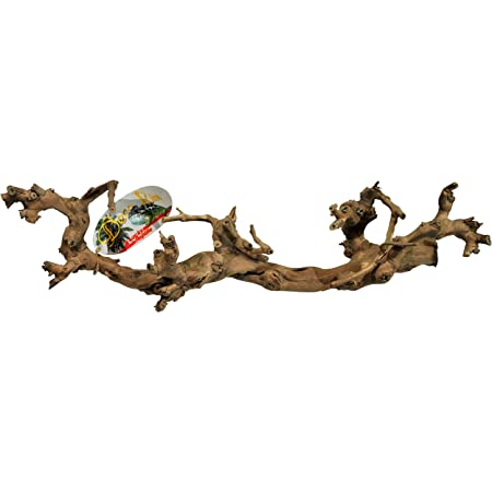3 armig Rebe Vogelsitzplatz SAHAWA® Weinrebe 50-60 cm Floristik Vogelstange Vogelkäfig Zoo Spezi Terrariendeko Rebholz Vogelkäfig