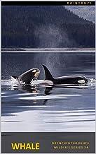 Whale in 5 Words: Wildlife Series: 2021 Series
