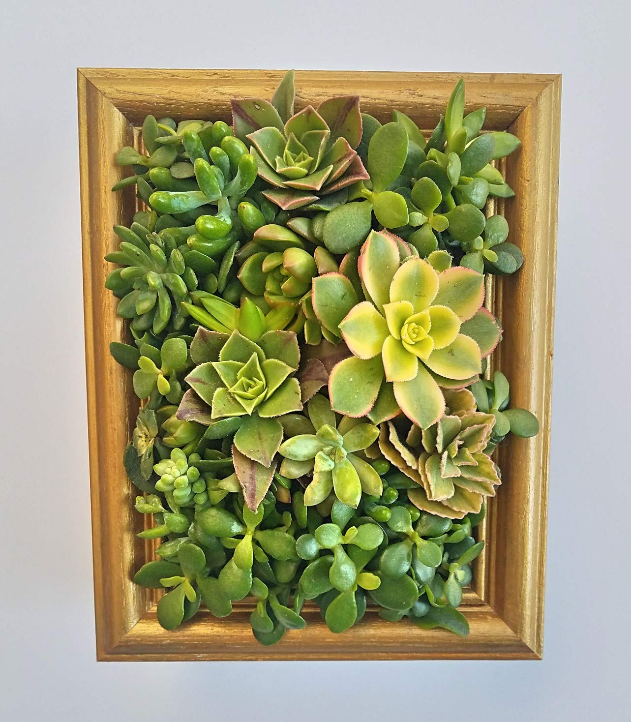 Choice Hanging Picture Planter Houston Mall