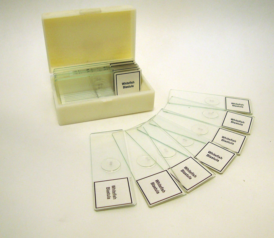 Prepared Slide Animal Industry No. 1 Mitosis Now free shipping of Classpack Sides 15