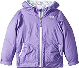 Dahlia Purple