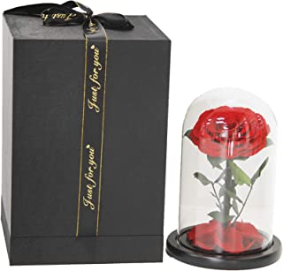 Best swarovski beauty and the beast rose Reviews