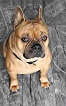Notebook: French bulldog animal cute charming sweet dog spaniel poodle rottweiler schnauzer