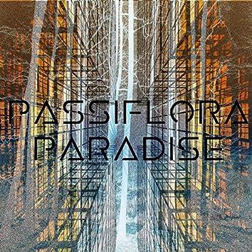 Passiflora Paradise