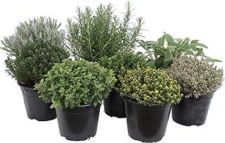 Paquete de hierbas italianas con 5 hierbas/orégano, albahaca, perejil, tomillo, mejorana / 250 semillas/Ideal para el alfé...