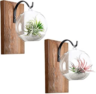 Dahey Wall Glass Planter with Wood Board Rustic Decor Air Plant Holder Hanging Terrarium Wrought Iron Hooks for Indoor Office Home Decorations, Orb 2 Set