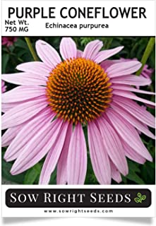 Sow Right Seeds - Purple Coneflower/Echinacea Flower Seeds for Planting - Non-GMO Heirloom Seed - Full Instructions to Plant an Herbal Tea Garden - Great Gardening Gift (1 Packet)