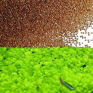 easy aquatic carpet plants
