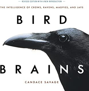 Bird Brains: The Intelligence of Crows, Ravens, Magpies, and Jays