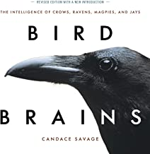 Download Book Bird Brains: The Intelligence of Crows, Ravens, Magpies, and Jays PDF