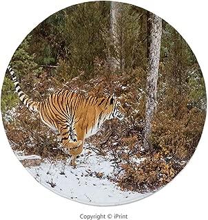 Memory Foam Round Area Rug Floor Kitchen Carpet, Safari Decor,Bengal Tiger in Snowy Jungle Hunting and Cruising for Prey Furry Majestic Mammal Photo,Orange Green, Soft Flannel Non-Slip Absorbent Mat