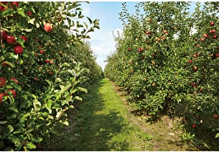 YongFoto 5x3ft Autumn Orchard Photography Backdrop Apple Trees Harvest Background Path Outdoor Autumn Outing Picking Festival Thanksgiving Day Banner Kids Adult Portrait Studio Props Wallpaper