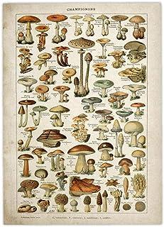 LAVALINK Arte del Cartel del Flor Floral Botánico Colecciones Jardín De Hongos Y Plantas Gráfico De Identificación Diagram...
