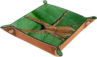 FCZ Wild Medical Arachnid Toile d'araignée Plateau de table de chevet Rangement Organisateur Boîte de rangement pour bijou...