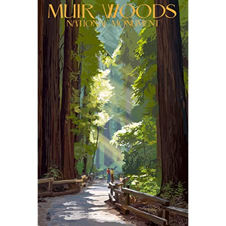 Sturdy Souvenir Magnet Muir Wood California Photographic Image of the Forest 3and 38 x 2 and 38