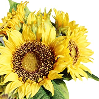 Best maroon and sunflower bouquet Reviews