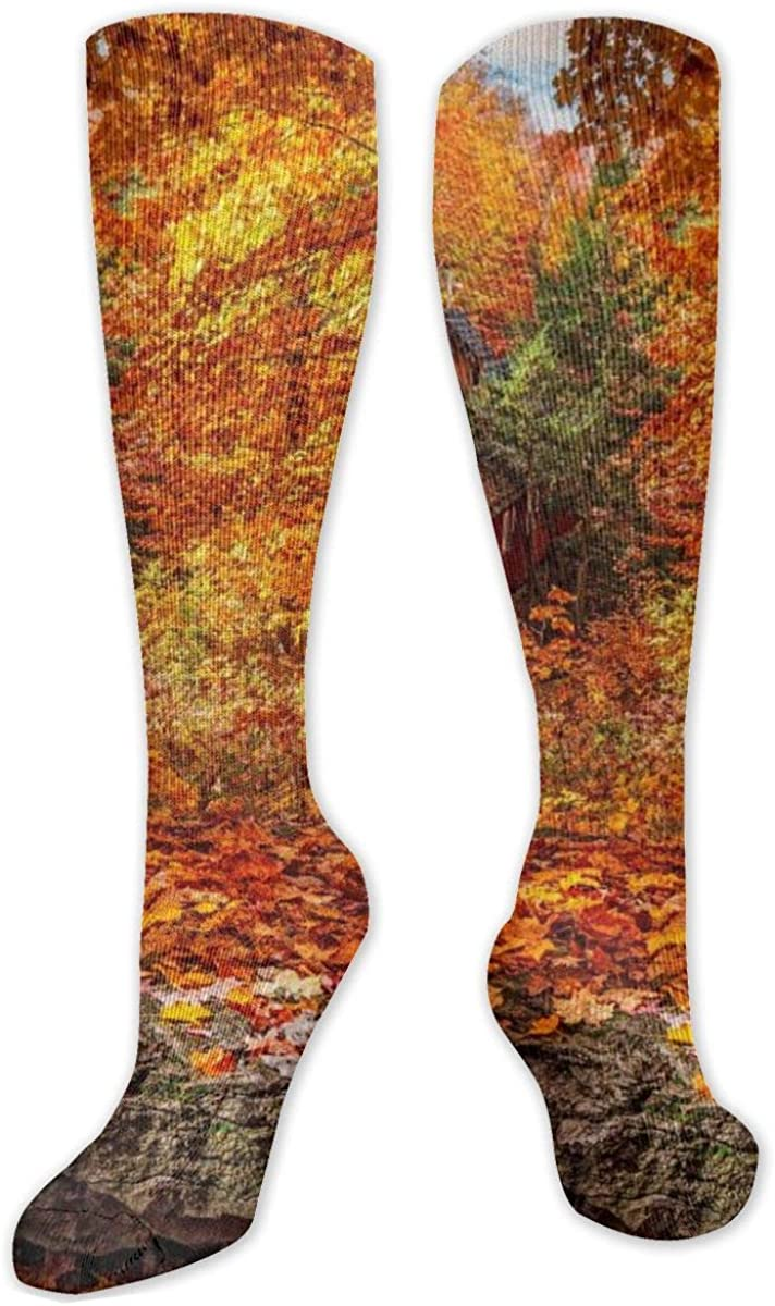 Autumn Forest Corridor Knee High Socks Leg Warmer Dresses Long Boot Stockings For Womens Cosplay Daily Wear