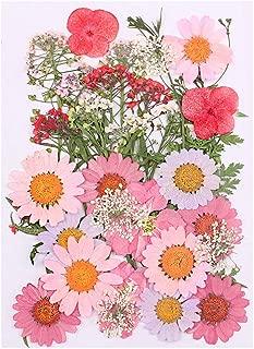 Natural Dried Flowers Bouquet Dry Flowers Decorative Hydrangea Bouquet Pink Larkspur, Mini Rose, Hydrangea, Daisy, Real Pressed Dried Flowers for Nail Art Soap Candle Resin Making Bath Craft (Flower)